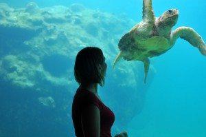 Femme devant tortue d'aquarium