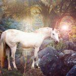 Dating Unicorns
